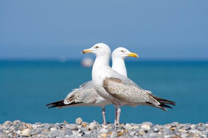 Location Cotentin mer-gîte de bord de mer-Mouettes