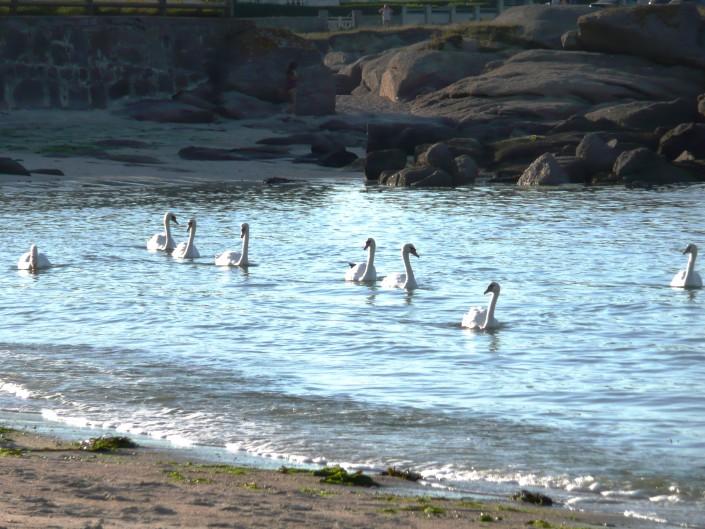 Location Cotentin mer-gîte de bord de mer-Plage du Sablon - Cosqueville